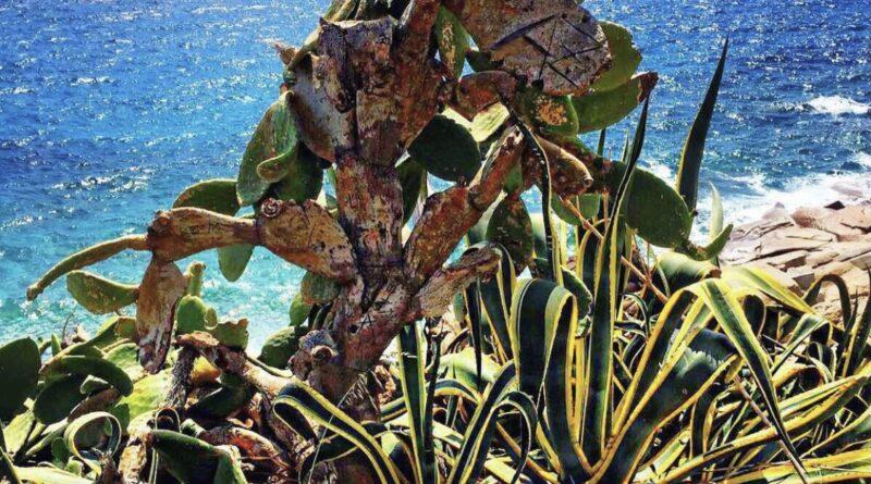 Nuova Vita nell'Isola di Gorgona