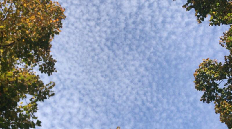 Aria malata, stop allo smog